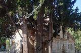 Τα τρία κυπαρίσσια του Πρίγκιπα Χριστόφορου στη Μητρόπολη των Αθηνών