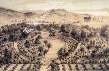 Το πράσινον των Αθηνών και αι αναδασώσεις κατά τον 19ον αιώνα