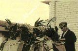 Τα ανθοφόρα γαϊδουράκια στην προπολεμική Αθήνα