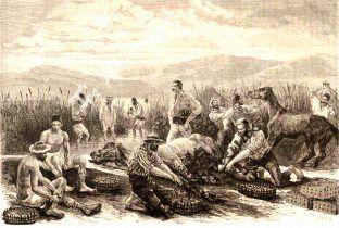 Όταν η Ελλάδα βγήκε στις αγορές (επί Όθωνος) εξάγοντας βδέλλες!